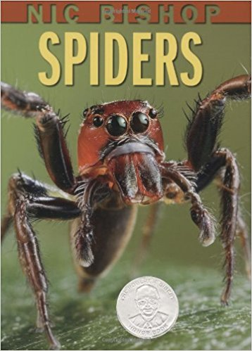 Spider Books for the Preschool Classroom - Nic Bishop Spiders