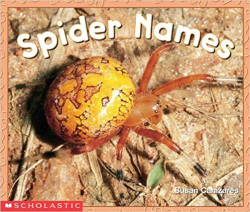 Spider Books for the Preschool Classroom - Spider Names